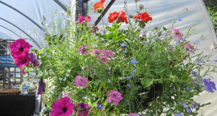 Bedding and Hanging Baskets