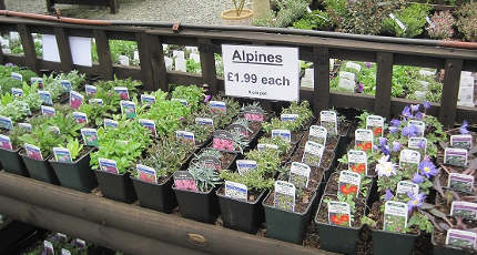 Alpines and Herbaceous